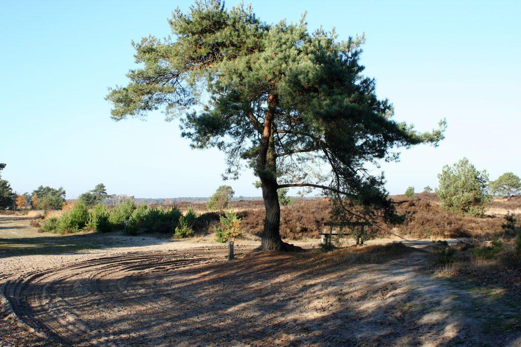 Antwerpen - De Kalmthoutse Heide 1