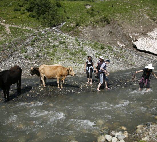 via verde reisen - Georgien - Wanderreise - Swanetien - Flussquerung mit Kühen